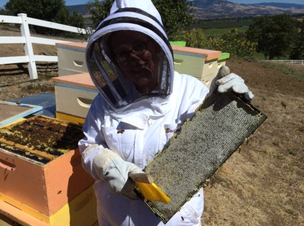 2015_Harvesting_Honey_from_Frame (2)