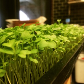 Micro management: Tiny greens give chefs fresh flavors to play with